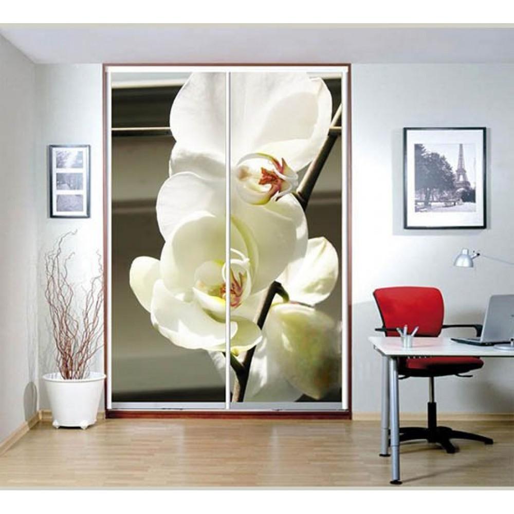 Образцы рисунков фотопечати на 2 двери